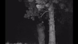 Bear Trouble-Critter Cam 2019