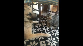 Cat cuddles with dog while he wants to have a nap