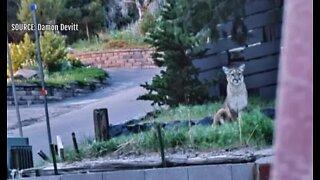 Mountain lion sighting alarms man
