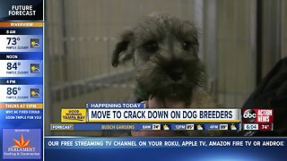 Hillsborough County Commissioners cracking down on commercial dog breeding facilities