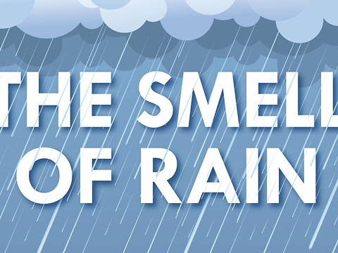 Know That Fresh Rain Smell? Here's What Causes It