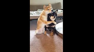 Adorable Dog Loves To Hug His Brother