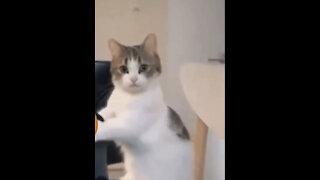 crazy cats living life! 😂