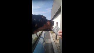 Dog in drive-thru picks up his puppuccino