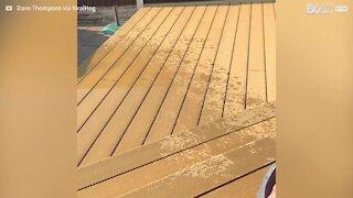 Cães adoram demasiado brincar na piscina!