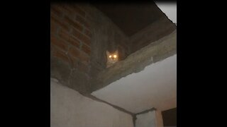 My Cat with Creepy Glowing Eyes