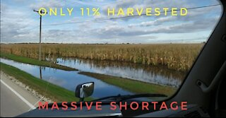 Food Shortage: Poor Harvest (Oct 2019)