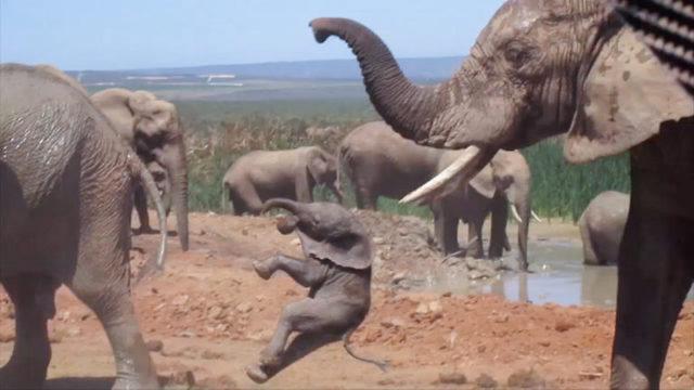 Elefantens brutale oppførsel vekker oppsikt