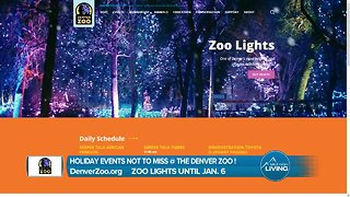 Denver Zoo Lights - Don't Miss this Awesome Holiday Event!