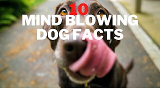 10 Facts about dogs that will BLOW YOUR MIND AWAY!