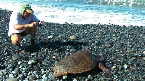 Zeeschildpadden op La Palma.