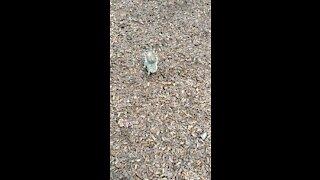 Friendly Squirrel Comes Close