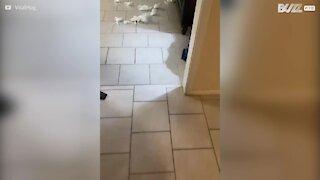 Cão tem culpado escrito na testa… e na boca!