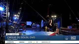 "Cirque du Soleil ""OVO"" comes to Phoenix"