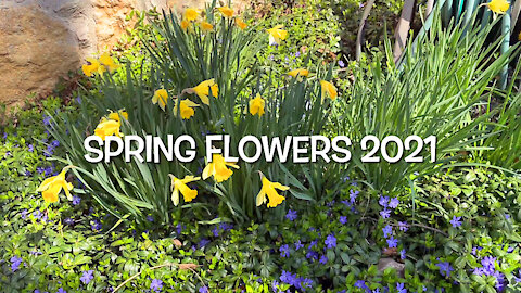Spring Flowers 2021
