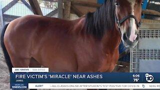 Valley Fire victim grateful horses survived