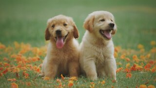 Funny Dogs Video Compilation Funny Videos