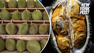 A chef, a kid and a dog taste-test world's smelliest fruit