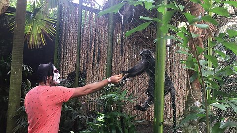 Dude scares monkeys at the zoo with scary mask