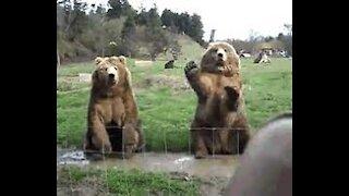 Bear saying goodbye how cute