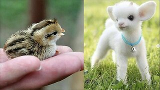 Cute baby animals Videos Compilation cute moment of the animals - Cutest Animals