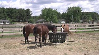 In 2010, she purchased the 30-acre property at 4519 E. Berry Road in Pleasant Lake so the horse could have its own space.