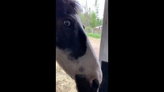 Brilliant therapy Horses Unload Themselves From Their Trailer