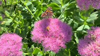 Beautiful fall flowers and butterflies