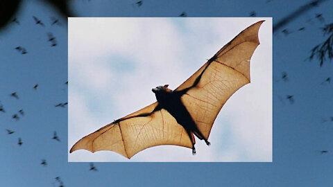 Two million bats swarm over bridge in Austin, Texas