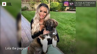 Olivia Attwood Introduces Newest Family Member