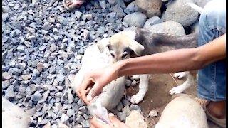 5 niños indigentes no estaban dispuestos a rendirse para salvar a un perrito de la calle