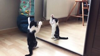 Kitty playing with his reflection