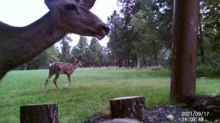 BABY Deer!
