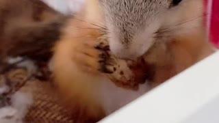 Cute animal,baby animal