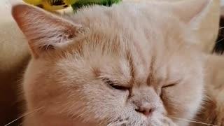 Кот и птица, милые животные #35