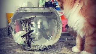 A cat trying to catch the fishes!