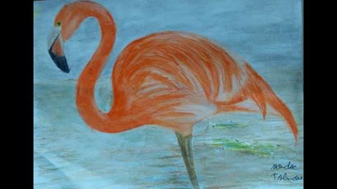 Drawing Orange Flamingo