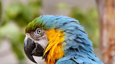 Parrot feel shudder watch yourself