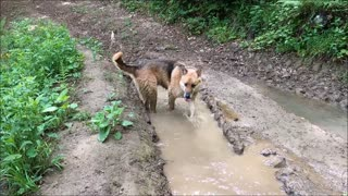 Dog in Dirty Water