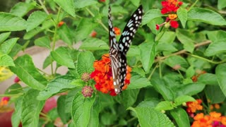 nature of butterfly