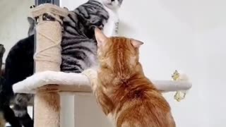 two cats are fighting