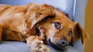 A pet dog puppy