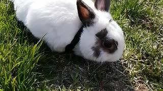 Chuck Bunny...1