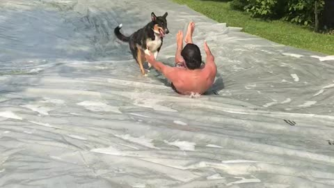 Slip and slide with the dog