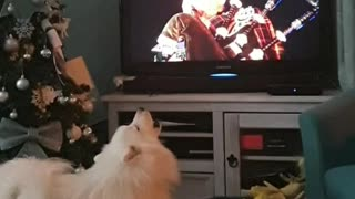 Festive dog sings along to bagpipes at New Years