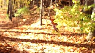 Dancing Leaf Royalty Free Footage