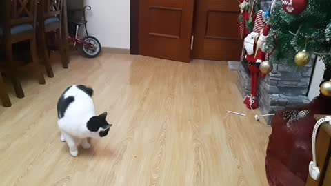 jumping cat with a pen