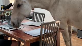 Amerigo the Porch Unicorn Hanging Out Inside with Family