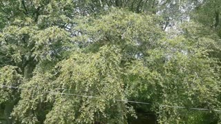 Relax Library: Video 15. Windy day at the forest hot and sunny . Relaxing videos and sounds