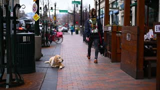 dog sitting quietly waits owners outside Restaurant